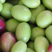 Verdale olives