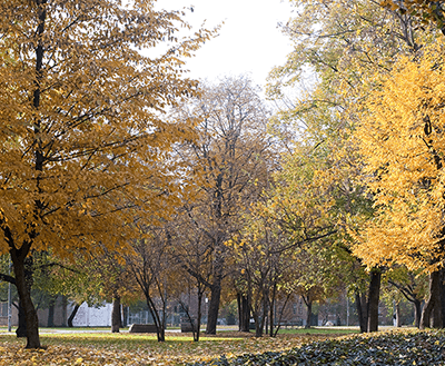 colourful-trees