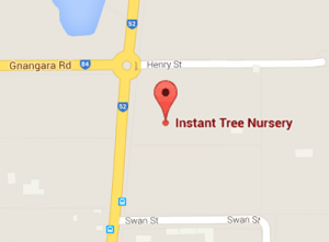 instant-tree-nursery-location-perth