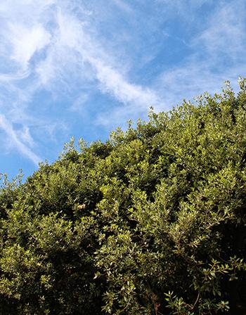 sky-and-tree-top